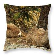 Deer In The Rockies Throw Pillow