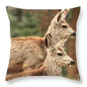 Deer In The Rocky Mountains Throw Pillow