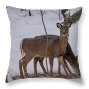 Deer In The Trees Throw Pillow