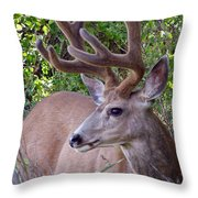 Buck In The Woods Throw Pillow