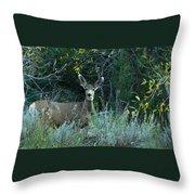 Deer Looking At You Throw Pillow