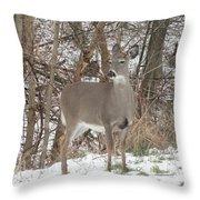 Deer Of Beauty  Throw Pillow