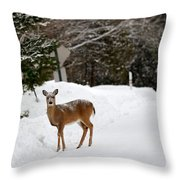 Deer On Side Of Road Throw Pillow