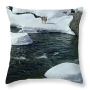 104618-v-deer On The Snow Bank Throw Pillow