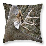 Deer Pictures 444 Throw Pillow