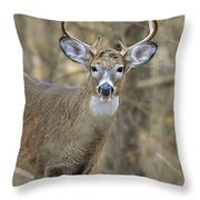 Deer Pictures 445 Throw Pillow