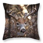 Deer Pictures 449 Throw Pillow