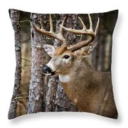 Deer Pictures 508 Throw Pillow