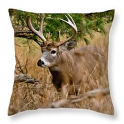Deer Pictures 525 Throw Pillow