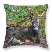 Deer Relaxing Throw Pillow