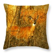 Deer Spotted In A Golden Glowing Field  Throw Pillow