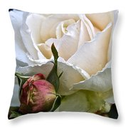 A Rose Of Delicate Beauty Throw Pillow