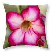 Delicate Desert Rose Throw Pillow