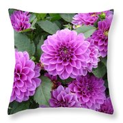 Delightful Dahlias Throw Pillow