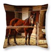 Delightful Horse Throw Pillow