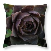 Delightful Seasons Welcome Throw Pillow