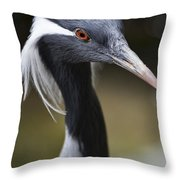 Demoiselle Crane  Throw Pillow by Douglas Barnard