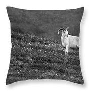 Denali's Majestic Wildlife Throw Pillow