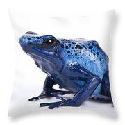 Dendrobates Azureus Throw Pillow