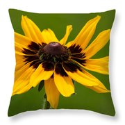 Denver Daisy Throw Pillow