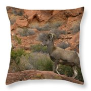 Desert Bighorn Sheep Throw Pillow