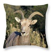 Desert Bighorn Sheep Zion National Park Throw Pillow