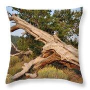 Desert Creation Throw Pillow