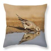 Desert Finch Carduelis Obsoleta Throw Pillow