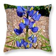 Desert Lupine-arizona   Throw Pillow