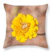 Desert-marigold Moth Throw Pillow
