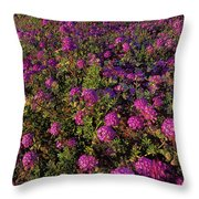Desert Sand Verbena Wildflowers Throw Pillow