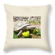 Desert Tortoise Delight Throw Pillow