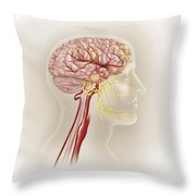 Detail Of Ateries Of The Human Head Throw Pillow