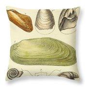 Devonian Fossils, Illustration Throw Pillow