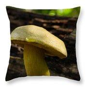 Dew Drop On Poriaceae Throw Pillow
