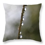 Dew Drops Clinging To A Grass Culm Throw Pillow