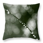 Dew Drops On Grass Culm - Monochrome Throw Pillow