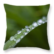 Dew Drops On Green Leaf Throw Pillow
