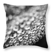 Dew Drops On Leaf Edge Throw Pillow