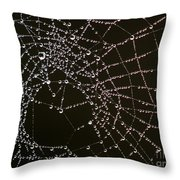 Dew Drops On Spider Web 4 Throw Pillow