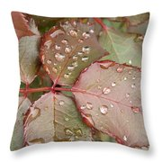 Dew Drops On The Rose Leaves Throw Pillow