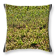 Dew In The Sun Throw Pillow