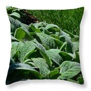 Dew Kissed Foliage Throw Pillow