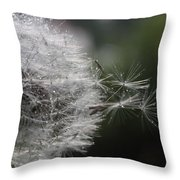 Dew On Dandelion Throw Pillow
