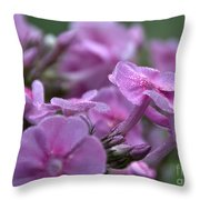 Dew On Phlox Throw Pillow