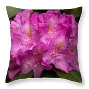 Dewy Rhododendron Throw Pillow