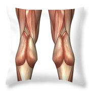 Diagram Illustrating Muscle Groups Throw Pillow