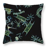 Diatoms And Dinoflagellates Throw Pillow by D P Wilson