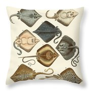 Different Kinds Of Rays Throw Pillow