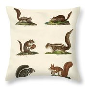 Different Kinds Of Squirrels Throw Pillow